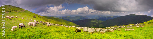 Tuinposter Schapen A flock of sheep on a mountain