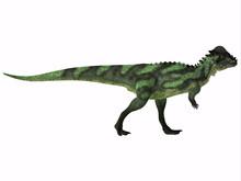 Pachycephalosaurus Dinosaur Si...