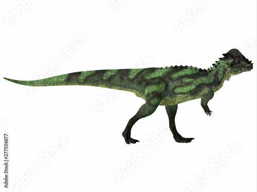 Pachycephalosaurus Dinosaur Side Profile - Pachycephalosaurus was an omnivorous dinosaur that lived in North America during the Cretaceous Period.