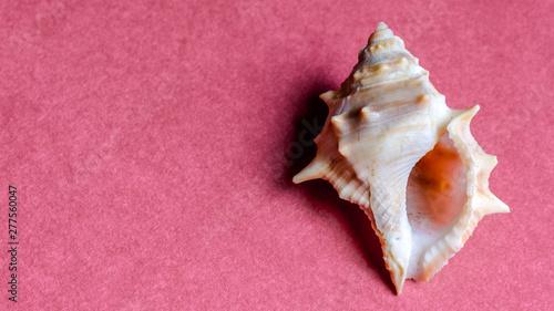 Photo conch shell of ritual
