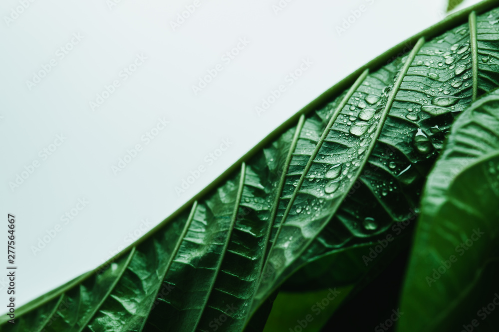 Fototapety, obrazy: Rain Water Drop