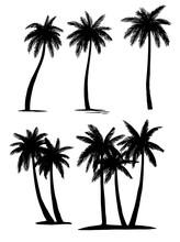 Set Tropical Palm Trees Plants, Black Silhouettes
