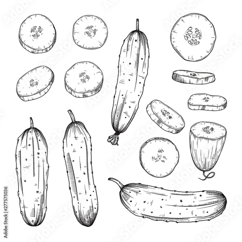 Fototapeta Set of different cucumbers isolated on white background. Vector obraz