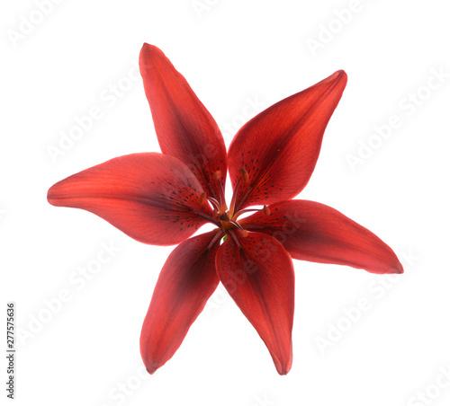 Garnet lily flower