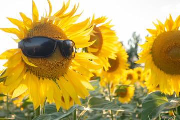 Sunflower Wear A Sunglasses...