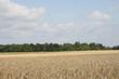 Krajobraz wiejski polny