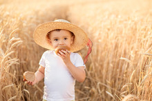 Portrait Of Little Toddler In Straw Hat Eating Bread Standing At Wheat Field Among Golden Spikes In Summer Day. Counry Life, Calmness And Summer Relaxation Concept