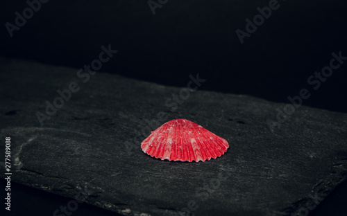Seashells from the sea on a stone dark background Canvas-taulu