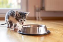 Kitten Licking Milk