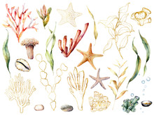 Watercolor Floral Underwater S...