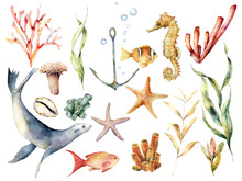 Watercolor Underwater Wildlife Set. Hand Painted Coral Reef, Sea Lion, Tropical Fish, Anchor, Seahorse And Laminaria Isolated On White Background. Aquatic Illustration For Design, Print Or Background.