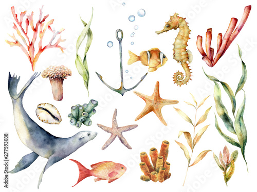 Fotografía  Watercolor underwater wildlife set