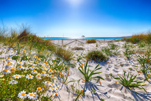 Landscape Of Grass And Flowers In Sand Dunes On The Beach La Cinta