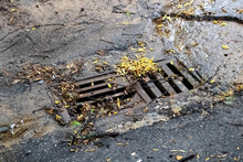 Asphalt Hatch With Yellow Leaves And Flowing Water