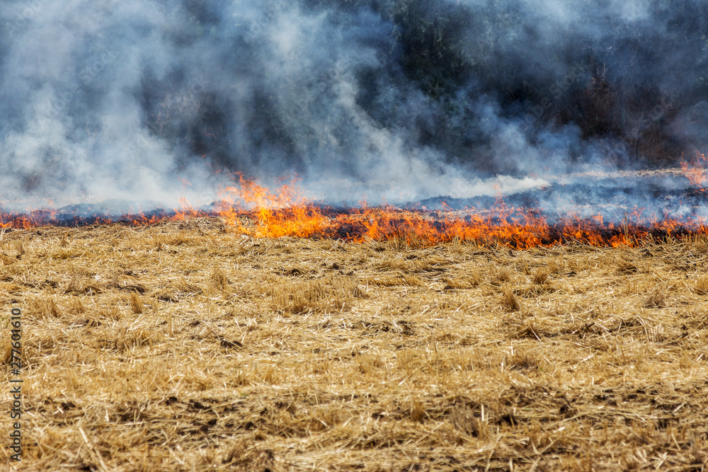 Fototapety, obrazy: Forest and steppe fires dry completely destroy the fields and steppes during a severe drought. Disaster brings regular damage to nature and economy of region. Lights field with the harvest of wheat