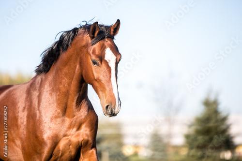 Fototapeta  Pferde auf der Weide