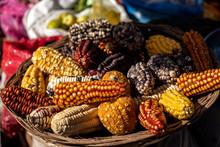 Peruvian Corn Harvest In The H...