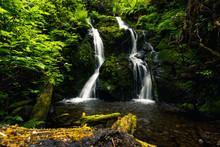 Cascade Falls, Quinault Loop T...