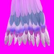 Leinwanddruck Bild - Feathers colorfull Minimal stylish flat lay design