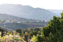 Bird Flying In New Mexico La Luz Sunrise In Residential Town View Of Sacramento Mountains Near Alamogordo With Sun Rays