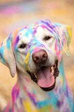Dog With Disco Ball