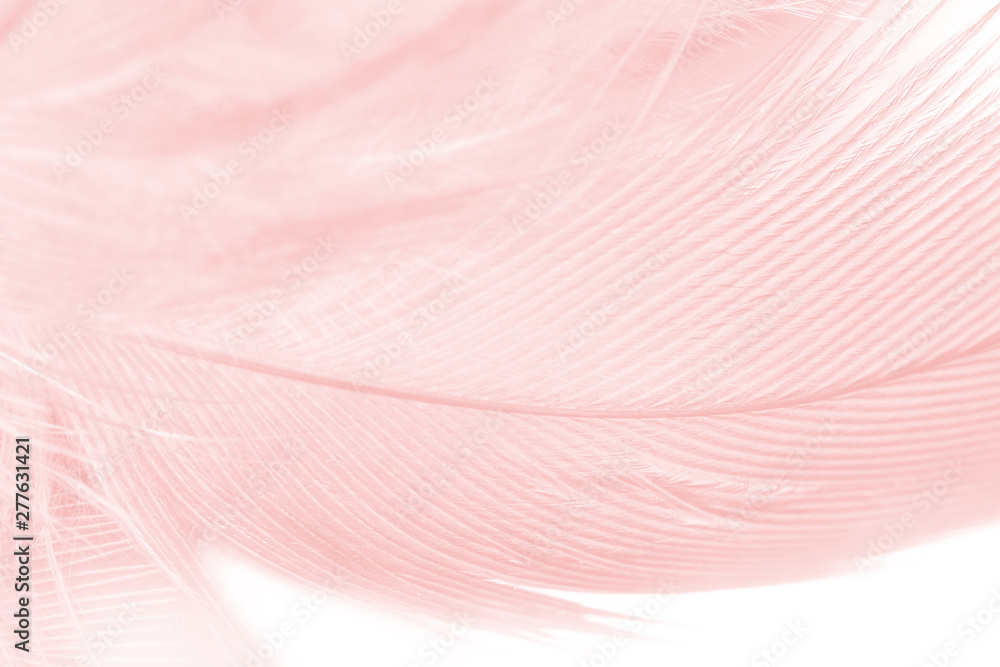 Fototapety, obrazy: Beautiful soft pink color trends feather pattern texture background