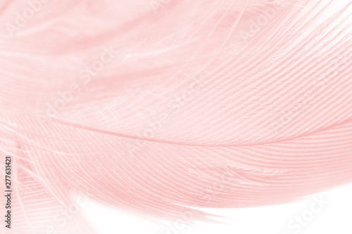 Photo  Beautiful soft pink color trends feather pattern texture background
