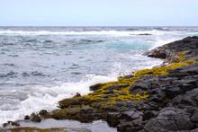Lava Küste Moos