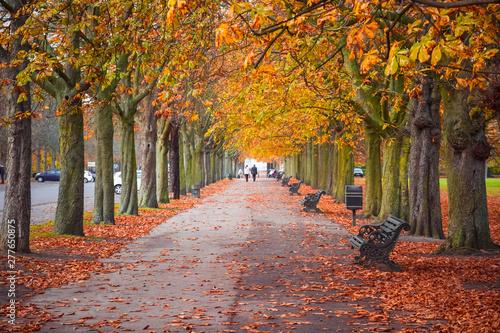 Fototapeta park tree-lined-autumn-scene-in-greenwich-park-london