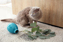 Cute Cat And Dropped Vase On Carpet
