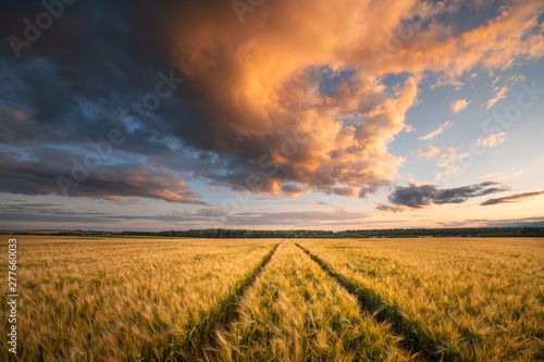 Poster Miel Wheat field. Agriculture.