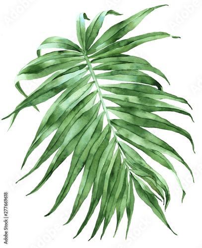 Green exotic palm leaf illustration - fototapety na wymiar