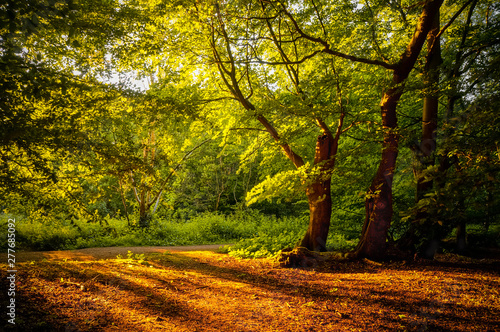 Canvas Print Warm sunshine breaking through the woods and casting long shadows on the earth of Epping Forest, Essex, UK