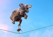 Elephant Balancing On The Tigh...