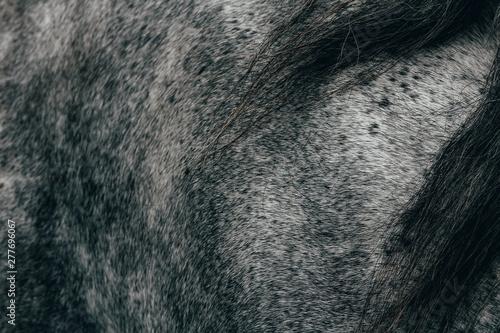Fotografía  Nice texture of roan grey horse with black mane