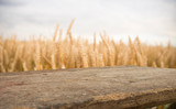 Fototapeta Las - wood board table in front of field of wheat on sunset light. Ready for product display montage