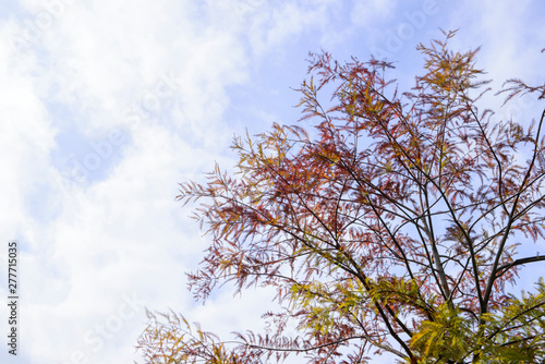 Photo Looking up at cypress trees in Autumn
