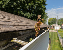 House Gutter Clogged With Tree Leaves, Sticks, And Debris. Tree Sapling Growing In The Mold And Mildew Covered Gutter