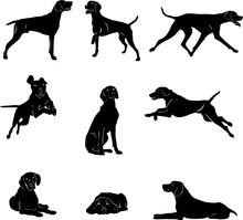 Dog, Kurchaar, Breed Of Dogs, ...