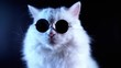 Portrait of white furry cat in fashion eyeglasses. Studio footage. Luxurious domestic kitty in glasses poses on black background.