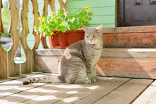 The Beautiful Striped Cat Is On The Porch Of A House In Summer Day.