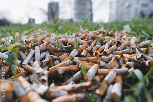 Fotografija  View of the pattern of scattered cigarette butts in the green grass on the meadow in the park of a big city