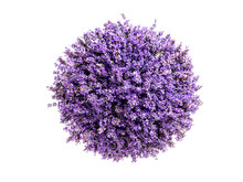 Little Planet Lavender