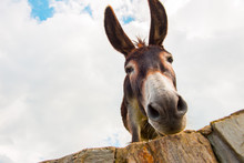 View To Donkey Standing At Cloudy Background Looking At Camera