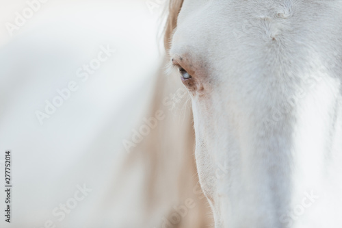 white horse family in the middle of nature Canvas-taulu