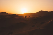 Minimalist View Of Camels Silhouettes On Sand Dune In Desert Against Sunset Light, Morocco