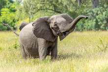 Game Reserve Wildlife With African Elephant