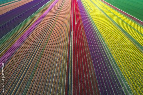 Germany, Saxony-Anhalt, aerial view of tulip fields