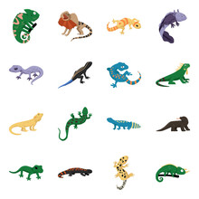 Vector Illustration Of Animal And Reptile Logo. Collection Of Animal And Nature Stock Symbol For Web.
