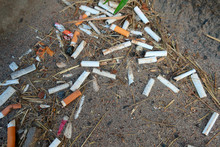 Discarded Cigarettes Littered ...